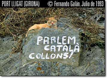 Lenguas de gato